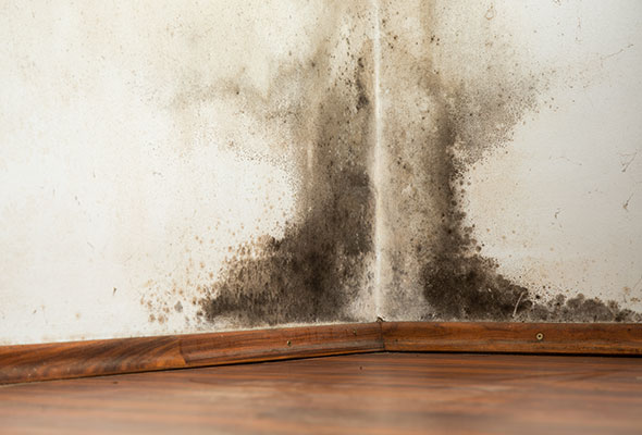 Mold-Remediation-and-Mold-Removal-Services-DC