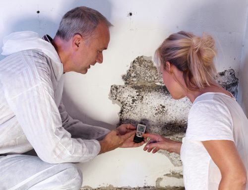 What to Expect During the Mold Remediation Process